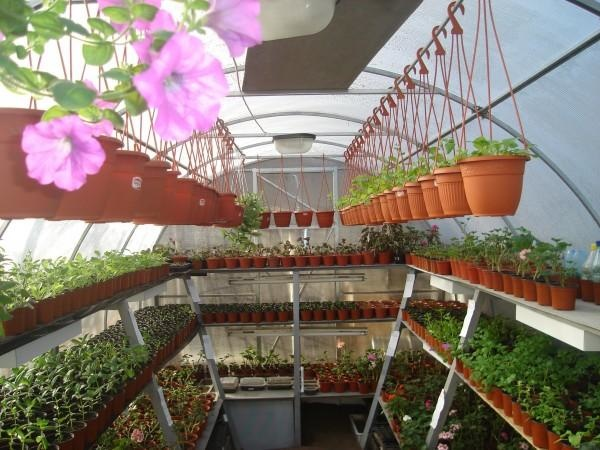 Как грамотно обустроить теплицу внутри - комфортная работа и щедрый урожай
