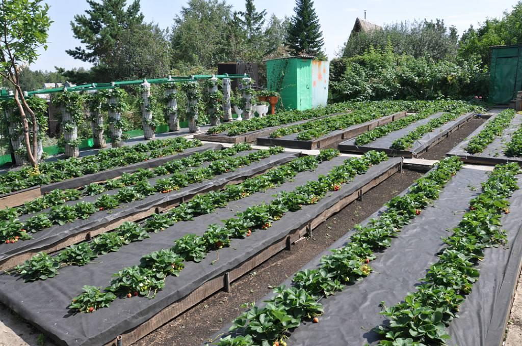 Грядки для ленивых фото и рекомендации по созданию огорода