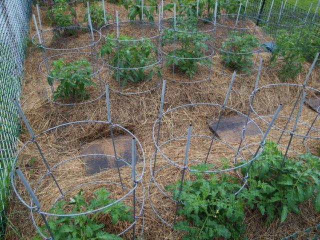 Как сделать грядку под помидоры на даче: пошаговое руководство, идеи + фото
