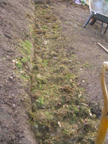 Как сделать теплую грядку для огурцов осенью: пошаговое руководство + фото