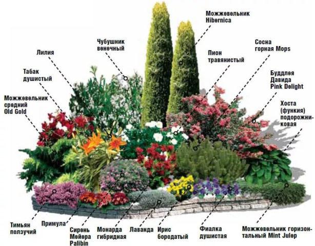 Миксбордер из хвойных и кустарников: готовые схемы + изумительные идеи с фото