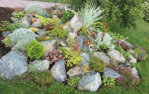 Альпинарий в тенистом месте: секреты оформления + особенности выбора растений