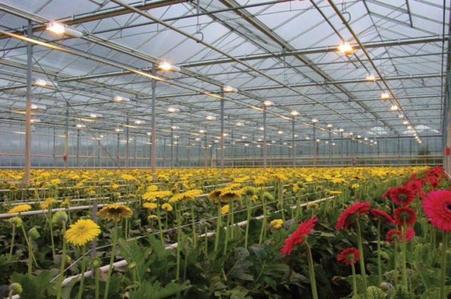 Теплицы в земле своими руками – богатый урожай круглый год