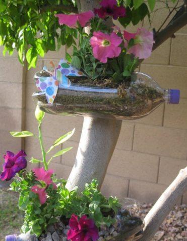 Вертикальная клумба из петуний своими руками - красота при минимальных затратах