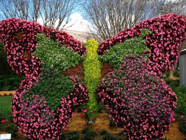 Эффектная клумба в виде бабочки: секреты оформления шикарного цветника