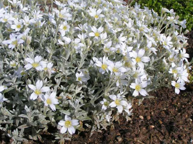 Рокарий с хвойными растениями: руководство по созданию уютного уголка в саду