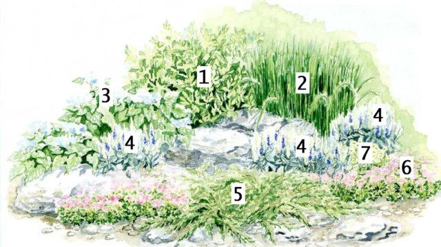 Красивые миксбордеры из многолетников: готовые схемы + грамотный подбор растений
