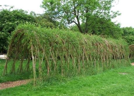 Живая изгородь из ивы своими руками – оригинальный забор при минимуме затрат