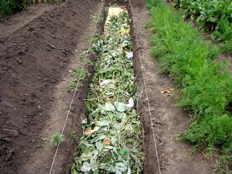 3 способа сделать теплую грядку для огурцов: заботимся об урожае осенью