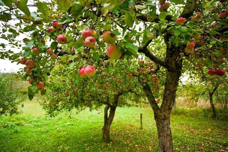 Дрова из разных пород дерева: хорошие и плохие, как выбрать