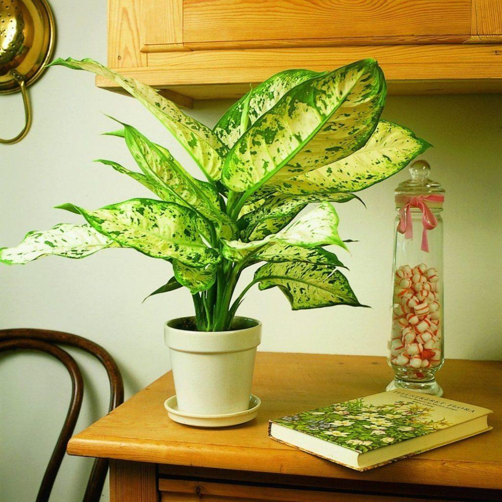 Модные комнатные растения, способные придать интерьеру стильный вид