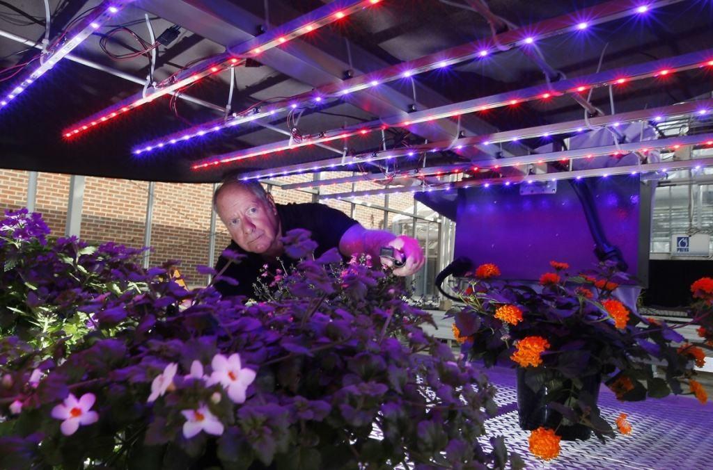Освещение теплицы: маленькие секреты большого урожая