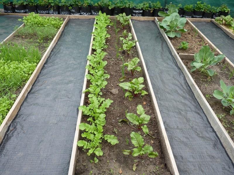 Топ бюджетных вариантов для создания огородных дорожек