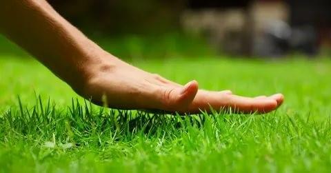 Как следить за зеленым газоном, чтобы он радовал своей красотой