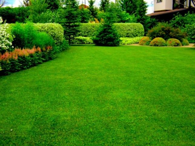 Выбираем газонную траву на дачу