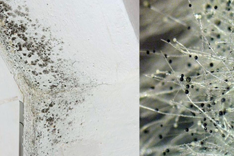 Как избавиться от плесени на окнах навсегда