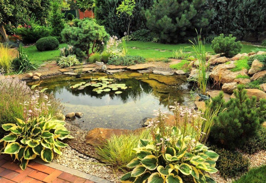 Садовый пруд: как установить, в чем его польза, как украсить