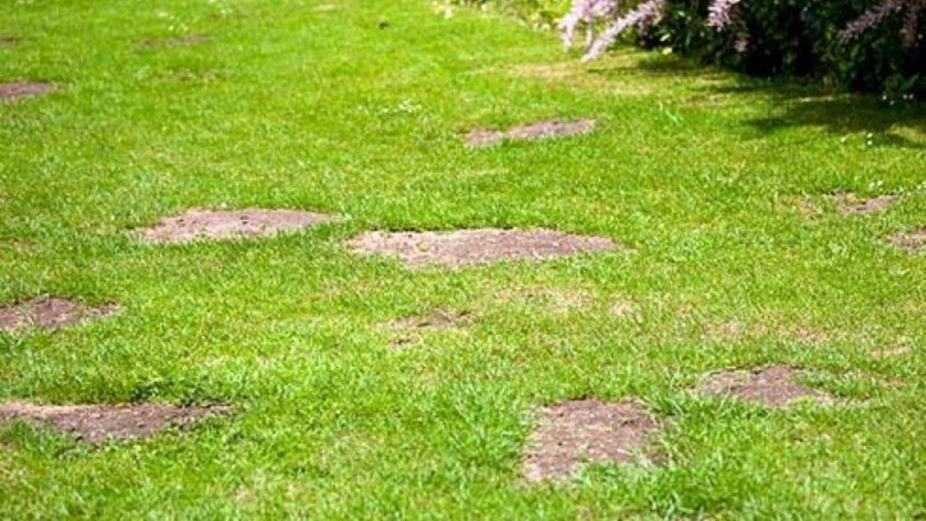 Проплешины на газоне: причины и обновление