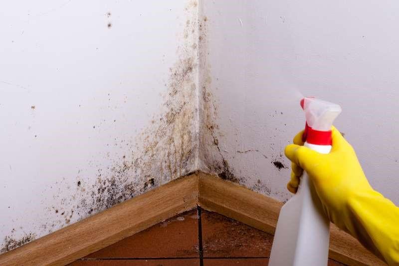 Почему в доме появляется плесень и как от нее избавиться